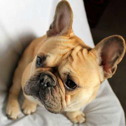 pupsforfreeadoption20180507043441955